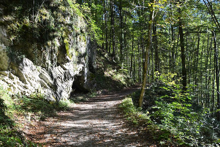 www.oooyeah.de_Bayern_Chiemgau_Wanderung_Waldpfad