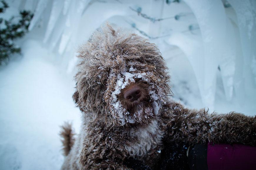 www.oooyeah.de_Finnland_Archipelago_Doggy2