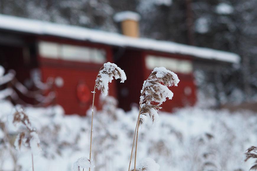 www.oooyeah.de_Finnland_Archipelago_Schilf