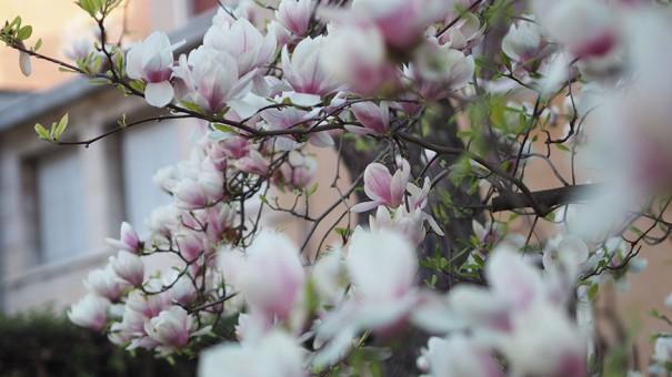 www.oooyeah.de_Verona_Blossom