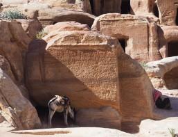 jordanien-petra-felsenhoehle-esel-www-oooyeah-de