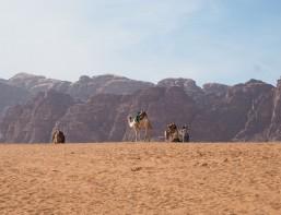 jordanien-vielfalt-kamele-www-oooyeah-de